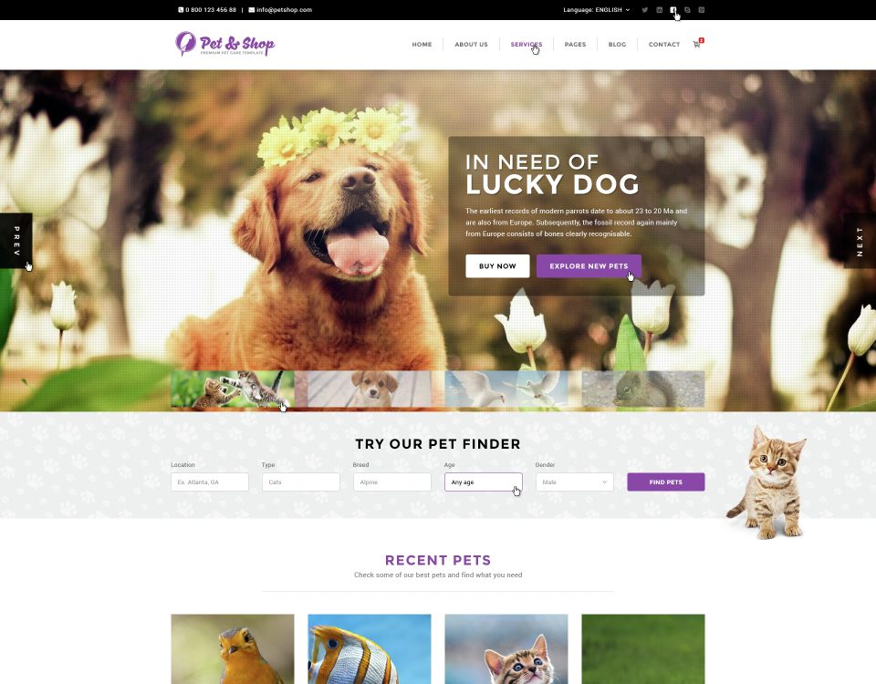 Pet Clinic 6